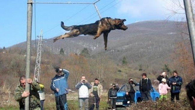 Kruté zvířecí rituály : Roztáčení psů na provaze nad vodou i krvavé zvířecí zápasy...