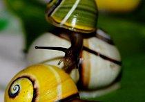 "Polymita picta: endemický druh šneka ""jako malovaného""."