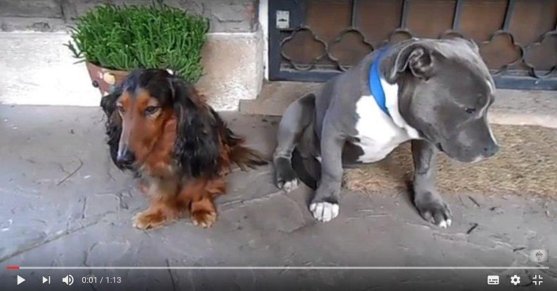 Psi a jejich reakce na naše emoce