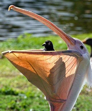Ptačí nenasytové