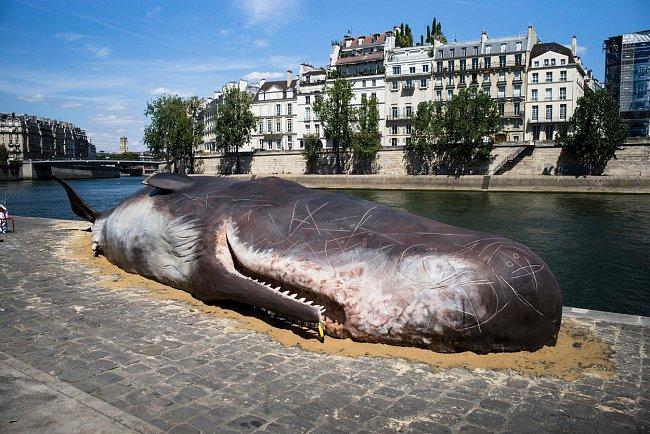 """V blízkosti slavné katedrály Notre Dame vzbudila """"mrtvá"""" velryba velký zájem."""