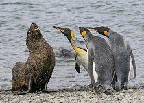 """9. místo: """"Tak řekneš už konečně, kam jsi dal ty ryby?!"""" (Amy Kennedy)"""