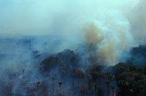 Vypalování pralesa za účelem získávání zemědělské půdy se zřejmě stane amazonskému pralesu osudným.