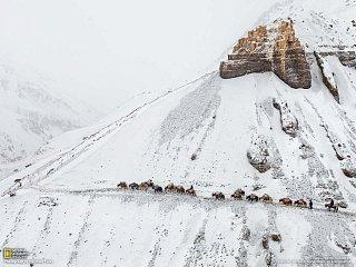 Karavan kyrgyzských kočovníků (Afghánistán)