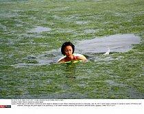 Mořská řasa sice není zdraví škodlivá, ale přeci jenom plavat ve čisté vodě je příjemnější.
