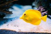 Sonia Rey Planellas z Univerzity ve Stirlingu zkoumala se svým týmem některé ryby a došli k závěru, že i obyvatelé vodní říše nejsou tak jednodušší tvorové, jak jsme si doposud mysleli.