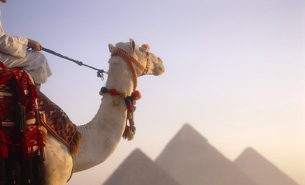 Zelenáč v zemi faraonů