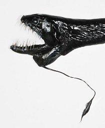 Ryba pásovka je postrachem mořských hlubin.