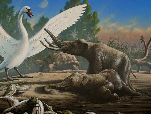 Mini mamut, který žil na Krétě, byl velký jako pes