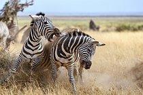 Žijí pouze v savanách nebo v horských biotopech střední a jižní Afriky.