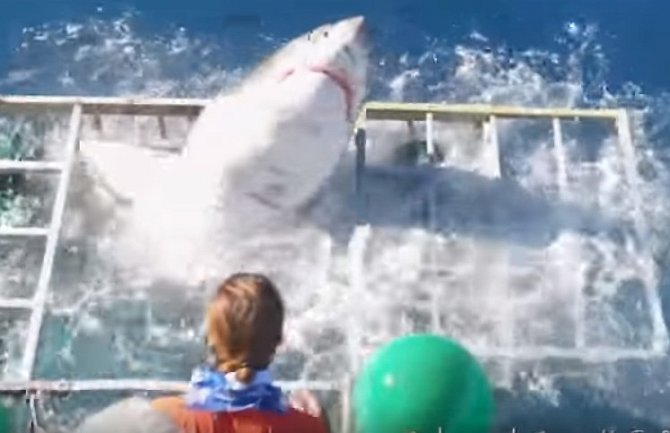 Žralok vnikl do klece s potápěčem