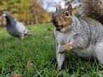 Vychytralé veverky udělají pro jídlo cokoli
