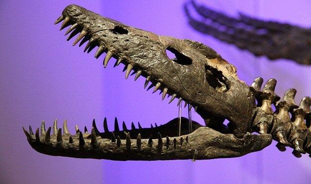 Dinosauři už vymírali, když je zabil meteorit. Nová studie budí kontroverze