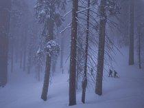 Sekvojovce obrovské, pevně zakotvené ve svém odlehlém biotopu, vzdorují váze zimního sněhu a dalším náročným podmínkám. Byly svědky různých časů, pořádků a lidí, kteří přicházeli a odcházeli.