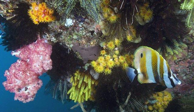 Velký bariérový útes je opravdovým potápěčským rájem