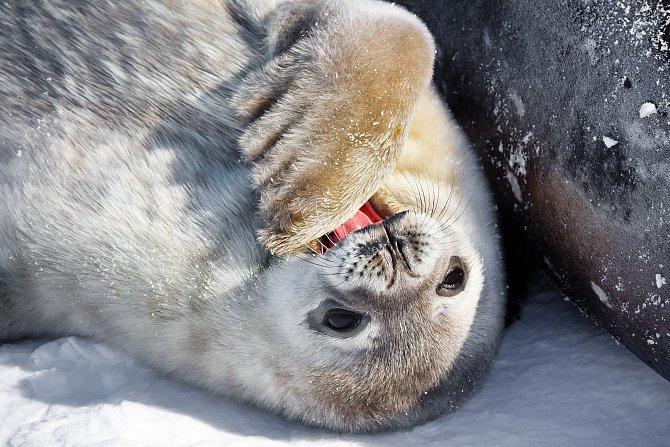 Zima je i zvířatům