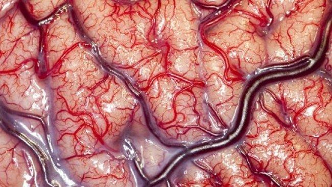 OBRAZEM: Fascinující fotografie z vědeckého výzkumu. Jsou krásné, a navíc vás poučí