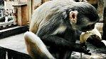 Galta v Indii. Poutní místo, kde mají své místo opice, lidé i bohové