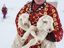 Dívka nese dvě jehňata k matkám na noc. Když je obzvlášť velká zima, zůstávají choulostivá mláďata v teple v obydlích pastevců zavěšená v látkových vacích.