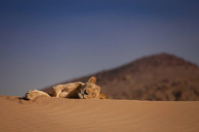 Své schopnosti poměří lev, tygr a gepard. V přírodě jsou sebevědomí, dominantní a nebojácní. Odborník na divoká zvířata Boone Smith chce u velkých koček otestovat jejich inteligenci, agilitu, smysly a instinkt.