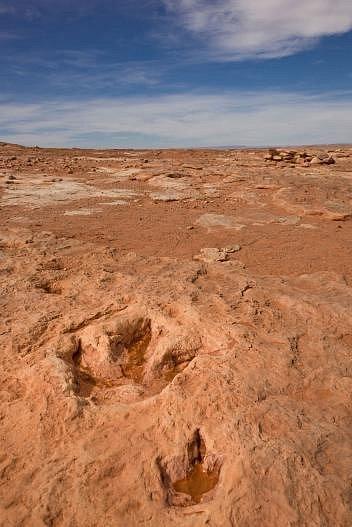 Dvě řady stop objevené poblíž vesnice Moenkopi vArizoně patrně zanechala matka a mládě druhu Dilophosaurus wetherilli asi před 193miliony lety. Stopy jsou výmluvným svědectvím oživotě dinosaurů na počátku jurského období.