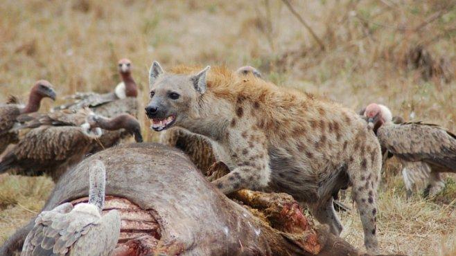 Začalo 6. vymírání druhů?