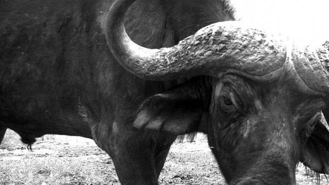 VIDEO: Utajený život zvířat v divočině. Odhalila jej skrytá kamera