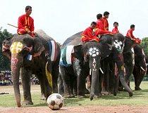 Fotbal v podání slonů bývá někdy i součástí turistických atrakcí.