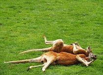 Spánek je pro zvířata důležitý - sbírají při něm energii.