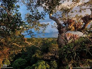 Ekvádor (Národní park Yasuní)