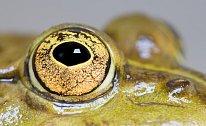 bylo prokázáno, že žáby vidí barevně.