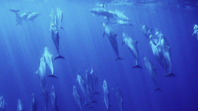 Moře budou vymírat. Oceány se podle vědců okyselují nejrychleji v historii