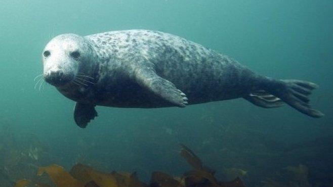 Tuleni v bitvě o ryby člověka porážejí na plné čáře. VIDEA