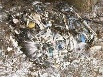 Není výjimkou, že se v žaludku mrtvých albatrosů objeví zubní kartáček, golfový míček nebo plastová hračka.