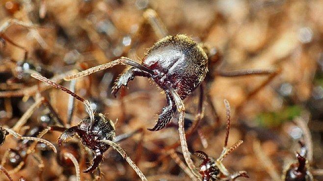 VIDEO: Když se roztočí mravenčí spirála smrti