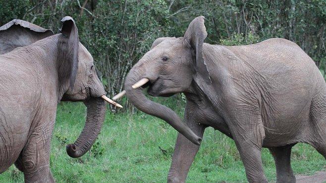Sloni v akci. Očima Dany Holečkové, ředitelky Zoo Dvůr Králové