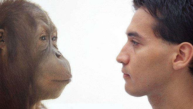Zvířata, která mají lepší paměť než vy. Otestujte se!