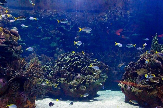Často vídáme fotografie s podmořskou panenskou přírodu a myslíme si, že tu se lidé rozhodli ochránit, ale ve skutečnosti tomu tak není.