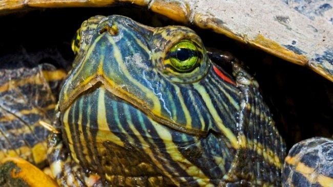 Hromadný hrob jurských želv byl nedávno objeven v Číně