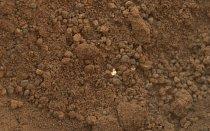 Světlý úlomek neznámého původu nzamotal odborníkům hlavu. Nakonec se shodli, že jde o látku z Marsu a nikoliv o úlomek z vesmírné lodi.