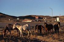 Skupina koní z otevřeného ranče prochází městečkem Silver Springs v Nevadě.