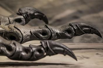 Detail zachycuje dráp a část chodidla téměř úplného exempláře druhu Tyrannosaurus rex, jemuž říkají Tristan Otto a který je vystaven vpřírodovědném muzeu vBerlíně.