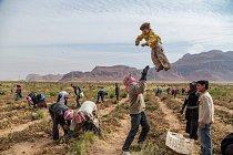 Malý syrský uprchlík si užívá vyhazování do vzduchu, zatímco si ti starší hrbí záda při trhání rajčat v Jordánsku, jež se dnes stalo domovem více než půl milionů Syřanů, kteří utekli před krvavou občanskou válkou.
