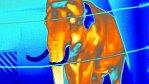 Zvířata termokamerou: tak vypadají obyvatelé pražské zoo