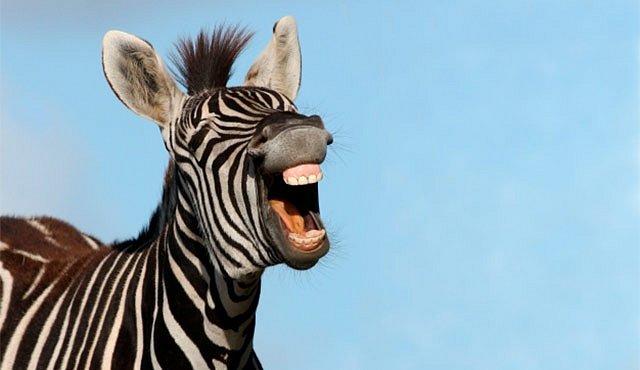 Vtipy z prostředí vědy, aneb smích s vyšším IQ