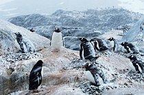 Na Antarktidě žije 8 druhů túčňáků.