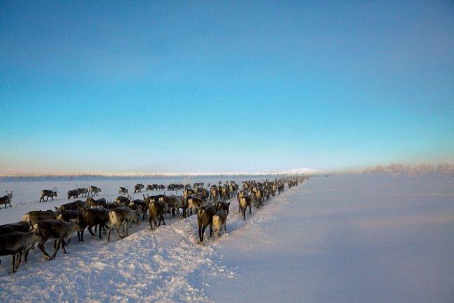 Sámové - ti, kteří tančí se soby