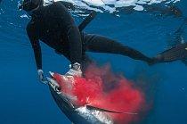 Malé pobřežní chráněné oblasti, zejména je-li vnich povolen rybolov, nemají podstatný význam pro mořské živočichy pohybující se na rozsáhlém území, například pro tuňáky (vuňák zasažený harpunou u Aliwal Shoal), některé žraloky a mnoho savců a ptáků.