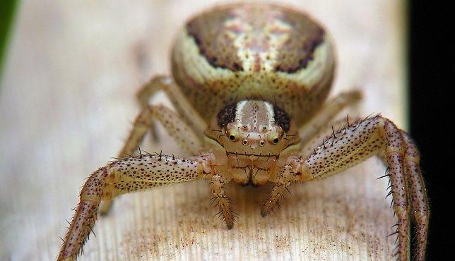 Pavučiny nestačí jen nastražit a čekat. Pavouci mají i jiné zbraně