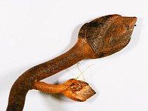Vilejš Vulcanolepis osheaii žije v hloubce kolem 1000 metrů.
